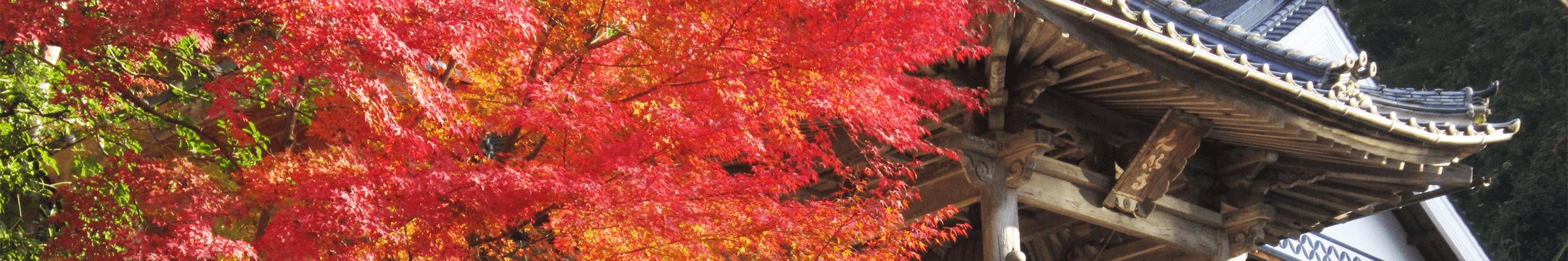 光明寺の四季